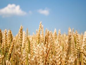 Općina Gorjani pozvala Vladu, Ministarstvo i Agenciju na promjenu Zakona o poljoprivrednom zemljištu